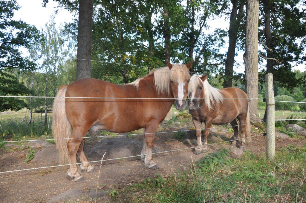 Fler fall av mjältbrand rapporteras från Omberg i Östergötland. Även en häst har dött av mjältbrand .