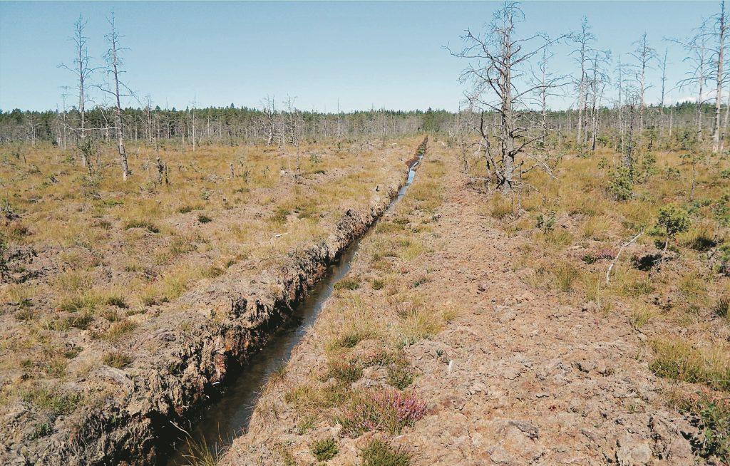Planerna att bryta torv på Ryholms stormosse vid sjön Viken avskrivs..