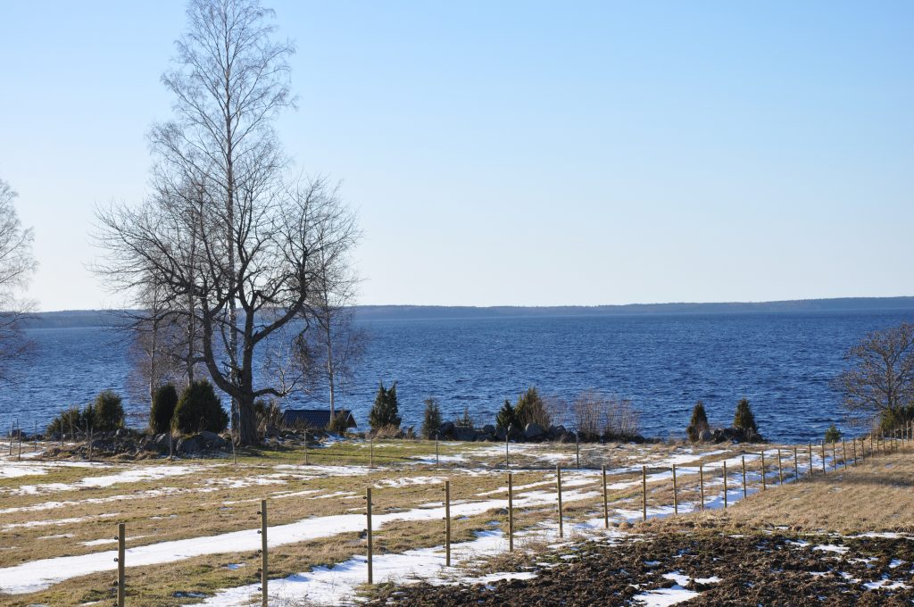 Vattenkvaliteten i sjön Viken står i centrum när länsstyrelsen ska pröva Rölunda Produkters dispensansökan för markavvattning från Ryholms stormosse, söder om sjön.