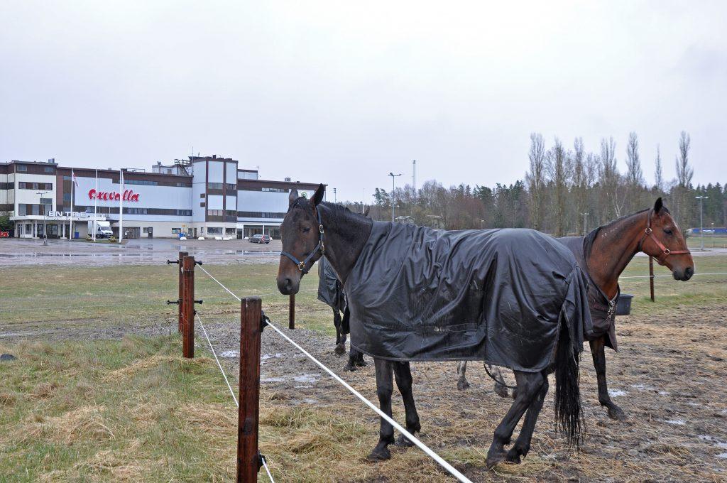 Hästcentrum Axevalla tog ett stort steg mot förverkligande när Västra Götalands regionutvecklingsnämnd nu godkänt satsningen.