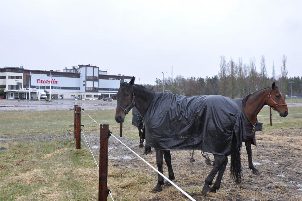 Idag beslutas om Naturbruksskolans lokaler vid det planerade regionala hästcentrumet vid Axevalla travbana.