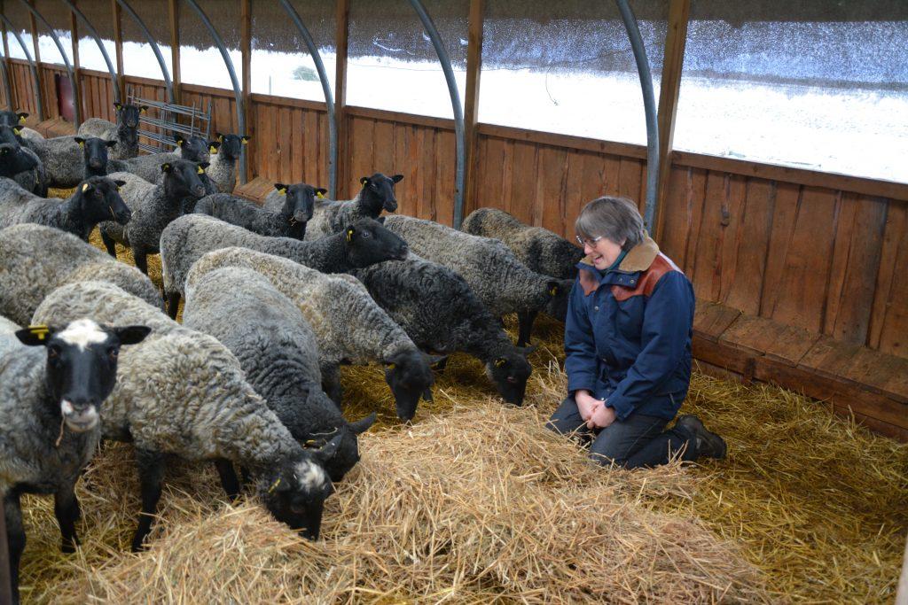 Ing-Marie trivs och tycker det är väldigt trevligt att arbeta med får. Men det är samtidigt ett jobb där det krävs ordning och reda.