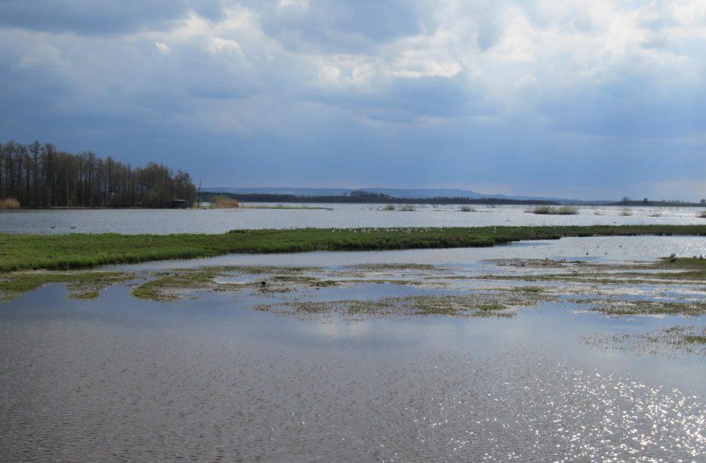 Striden om restaureringen av Hornborgasjön fortsätter. Naturvårdsverket vill inte gå markägare och LRF till mötes om en ny översyn av uppkomna markskador för lantbrukare. Men LRF ger sig inte.